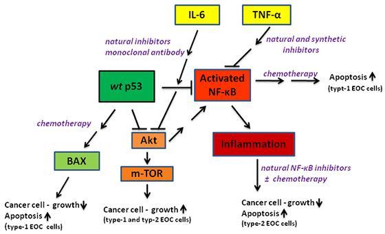 Advances In The Treatment Of Ovarian Cancer A Potential Role Of Anti Inflammatory Phytochemicals
