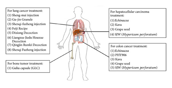 Therapeutic Applications Of Herbal Medicines For Cancer Patients